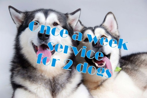 Once a week service for 2 dogs