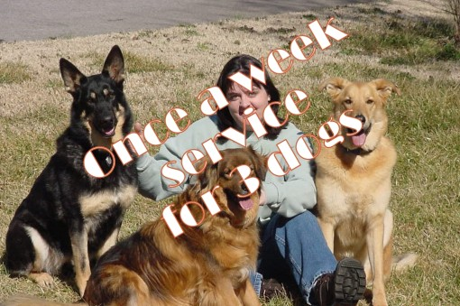 Once a week service for 3 dogs