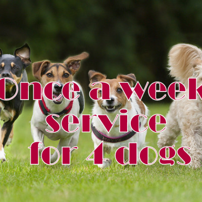 Once a week service for 4 dogs