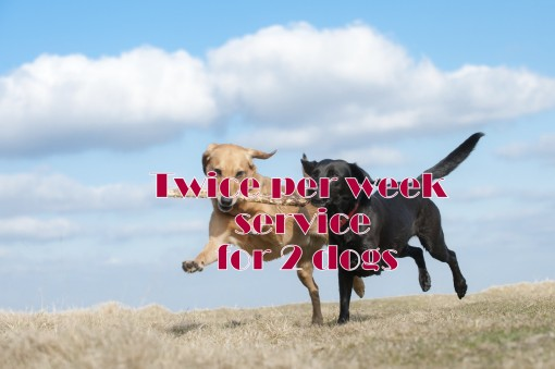 Twice per week service for 2 dogs