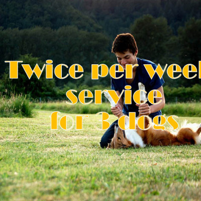 Twice per week service for 3 dogs