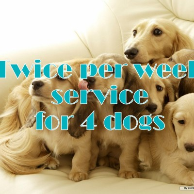Twice per week service for 4 dogs